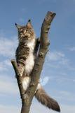 Kat die zich op tak bevindt Stock Foto's
