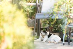 kat die zijn haar likken Royalty-vrije Stock Foto