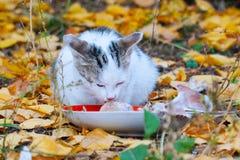 Kat die zijn voedsel op de achtergrond van de herfstbladeren eten stock afbeelding
