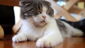 Kat die zo op de vloer slapen stock videobeelden