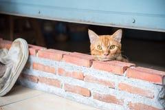 Kat die zoeken wat? stock foto