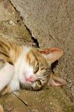 Kat die in zon ligt Stock Foto's