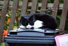 Kat in diepe slaap Stock Foto