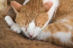Kat in diepe slaap Royalty-vrije Stock Afbeelding