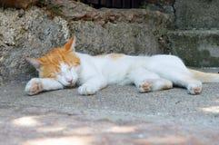 Kat in diepe slaap Royalty-vrije Stock Foto