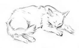 Kat in diepe slaap vector illustratie