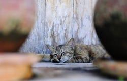 Kat in diepe slaap Royalty-vrije Stock Afbeeldingen
