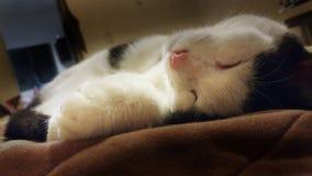 Kat in diepe slaap Stock Afbeeldingen