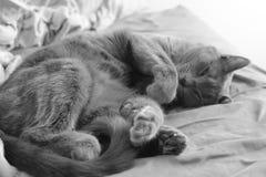 Kat in diepe slaap Stock Foto's