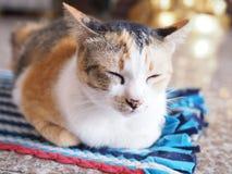 Kat in diepe slaap stock afbeelding