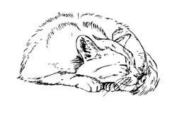 Kat in diepe slaap schets stock illustratie