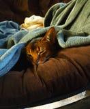 Kat in diepe slaap stock fotografie