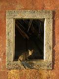 Kat door een venster Stock Fotografie
