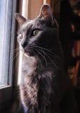 Kat door het venster Stock Afbeeldingen
