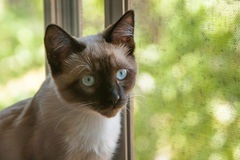 Kat door venster Royalty-vrije Stock Fotografie