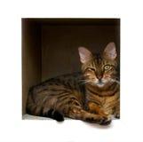 Kat in doos Stock Afbeeldingen