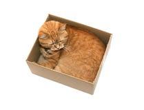 Kat in doos Royalty-vrije Stock Foto's