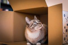 Kat in doos Royalty-vrije Stock Foto