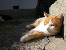 Kat in een Binnenplaats Stock Foto