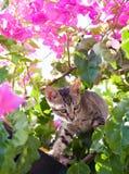 Kat in een boom Royalty-vrije Stock Fotografie
