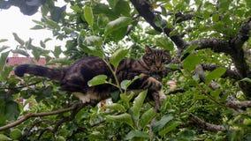 Kat in een boom stock fotografie