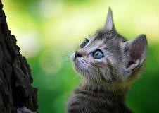 Kat in een boom die omhoog eruit zien Royalty-vrije Stock Foto's