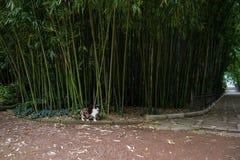 Kat in een botanische tuin Stock Afbeelding