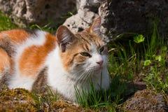 Kat in een de lentegras Royalty-vrije Stock Afbeeldingen