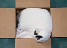 Kat in een Doos Royalty-vrije Stock Afbeelding