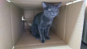 Kat in een doos stock foto's