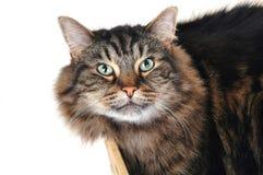 Kat in een doos 2 royalty-vrije stock foto's