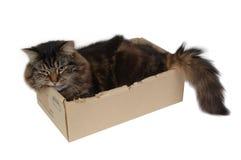 Kat in een doos 3 royalty-vrije stock afbeeldingen