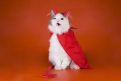 Kat in een duivelskostuum Royalty-vrije Stock Fotografie