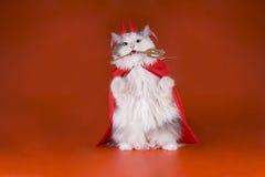 Kat in een duivelskostuum Stock Fotografie