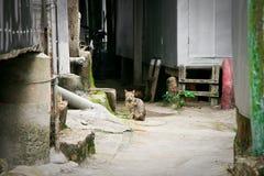 Kat in een engte Stock Fotografie
