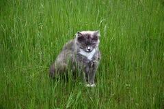 Kat in een gras Royalty-vrije Stock Afbeelding