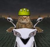 Kat in een helmrit een motor stock foto's