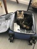 Kat in een karretje royalty-vrije stock afbeelding