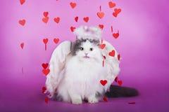 Kat in een kleding van engel Stock Afbeelding