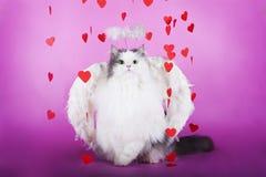 Kat in een kleding van engel Stock Foto