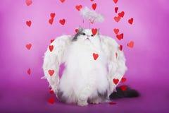 Kat in een kleding van engel Stock Afbeeldingen
