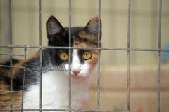 Kat in een kooi stock foto