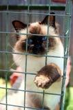 Kat in een kooi Stock Foto's