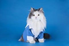 Kat in een kostuum Stock Afbeeldingen