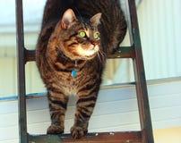 Kat in een ladder Royalty-vrije Stock Foto's