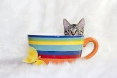 Kat in een mok stock fotografie