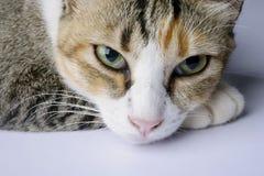 Kat in een ontspannen stemming Stock Afbeelding