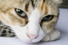 Kat in een ontspannen stemming Royalty-vrije Stock Afbeeldingen