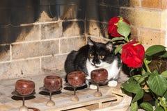Kat in een open haard Stock Fotografie