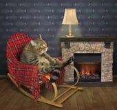 Kat in een schommelstoel dichtbij een open haard royalty-vrije stock fotografie